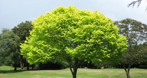 Un arbre en finance